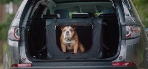 Uber aceita cachorro? E gato? Veja como transportar pets