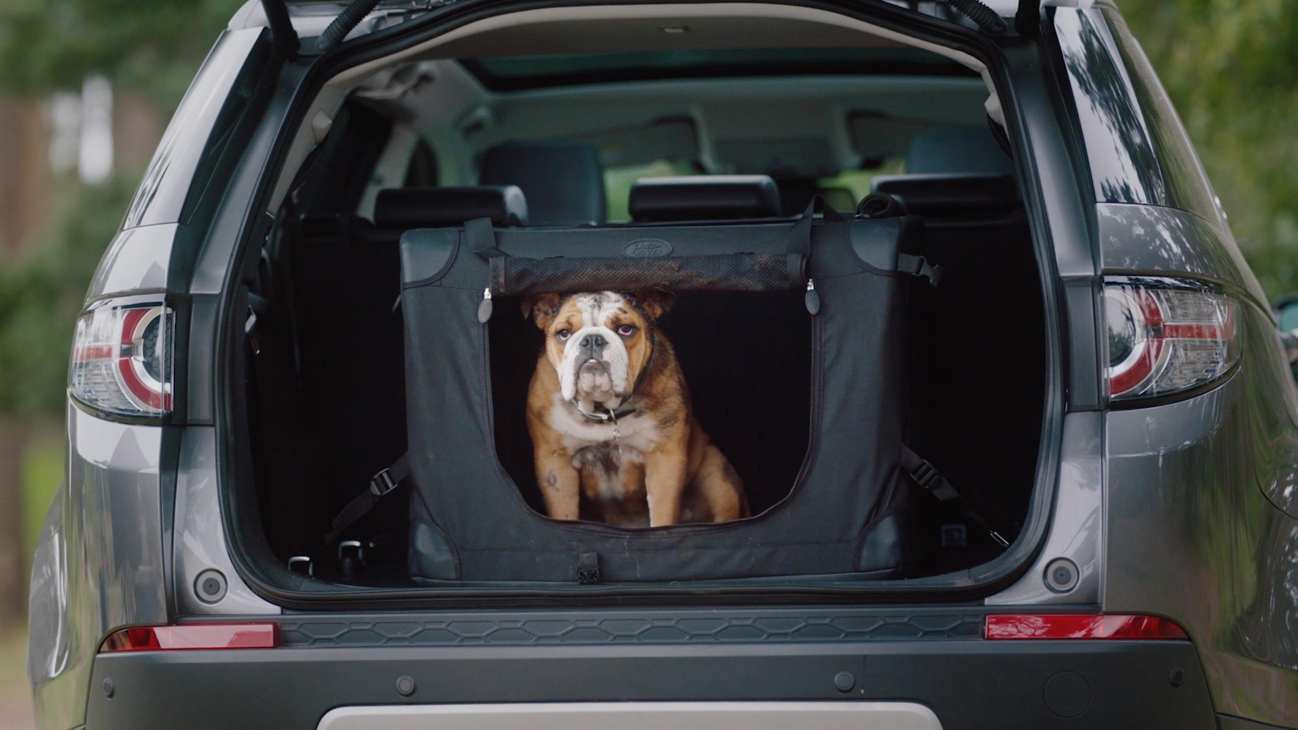 Cachorro dentro de caixa no porta-malas de um SUV