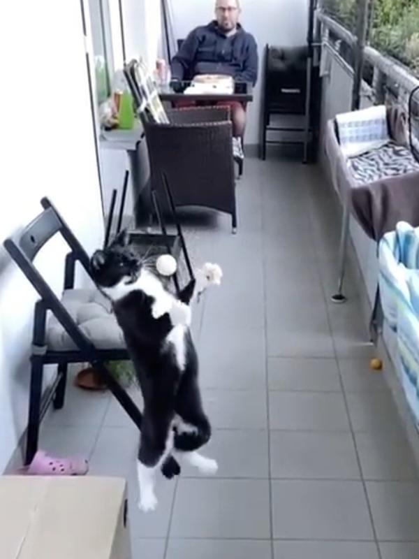 """Gato """"mata bola no peito"""" em vídeo do TikTok e viraliza entre internautas"""